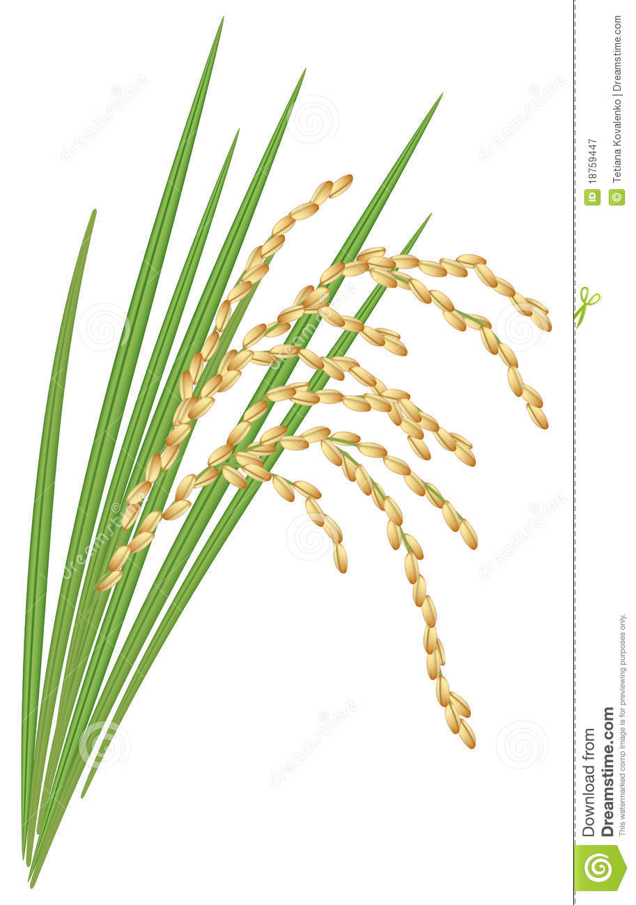 Cereal clipart rice plant.  collection of black