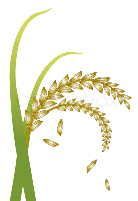 Drawing at getdrawings com. Cereal clipart rice plant