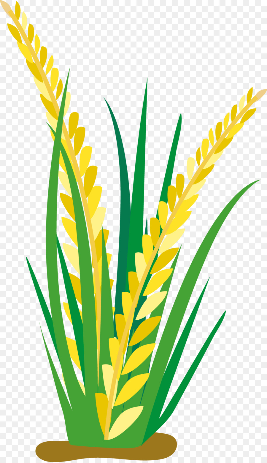 Cereal clipart rice plant. Cartoon oat clip art