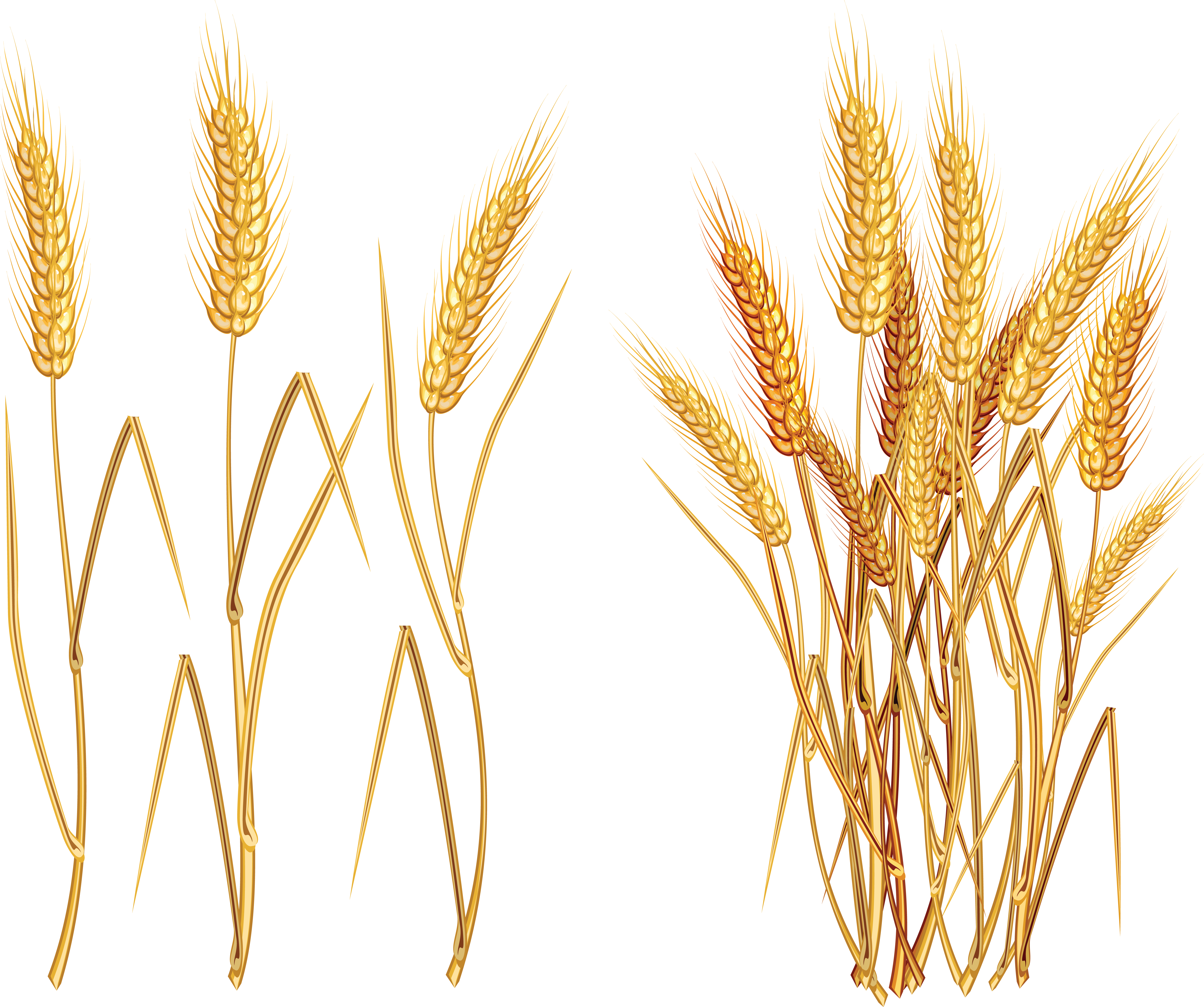 Png . Wheat clipart wheat seed