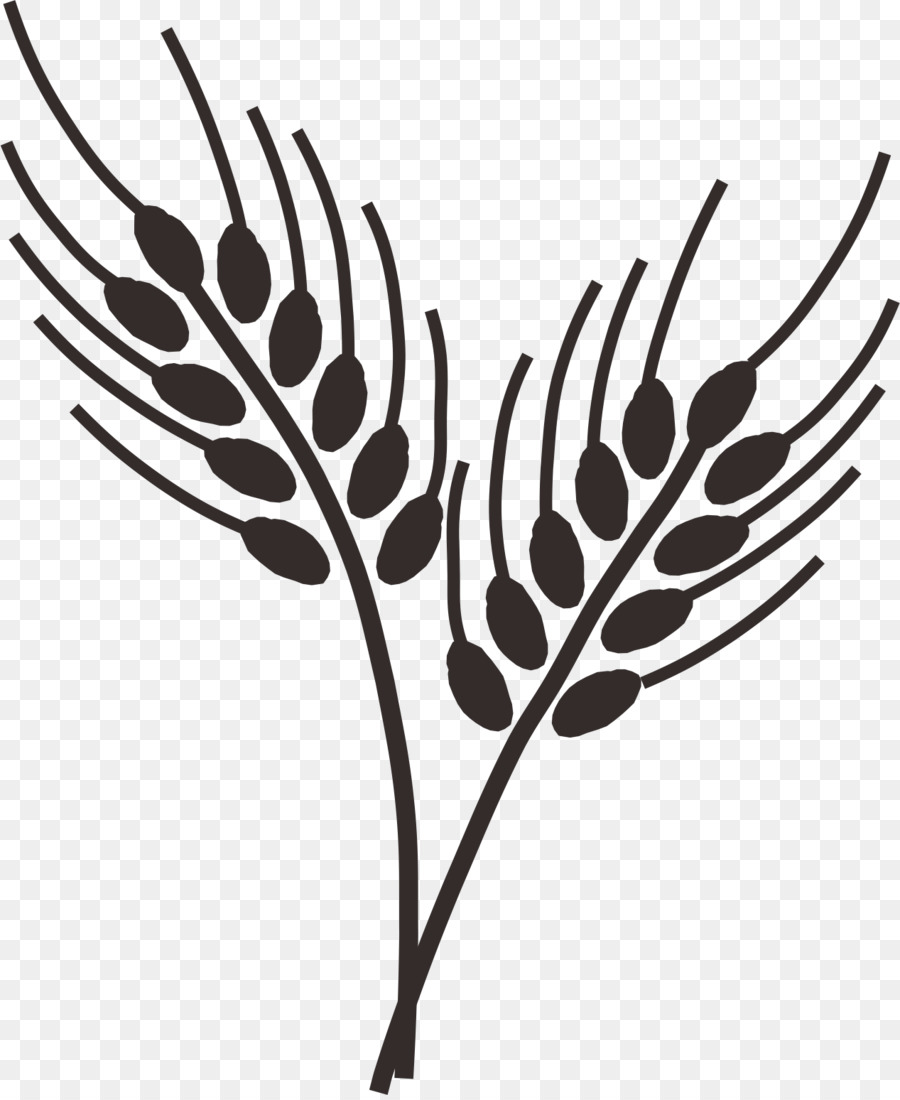 Common wheat drawing wheatgrass. Cereal clipart tree