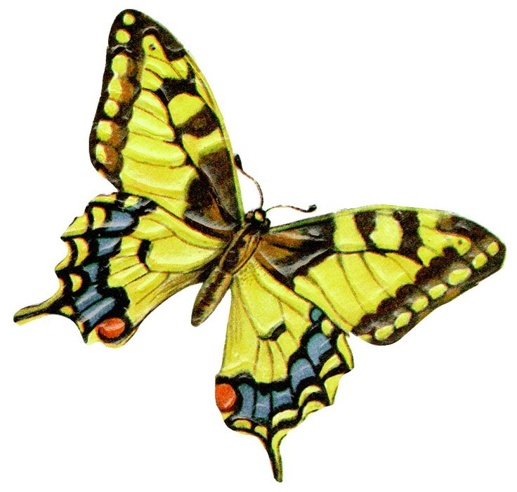 best art research. Chain clipart butterfly