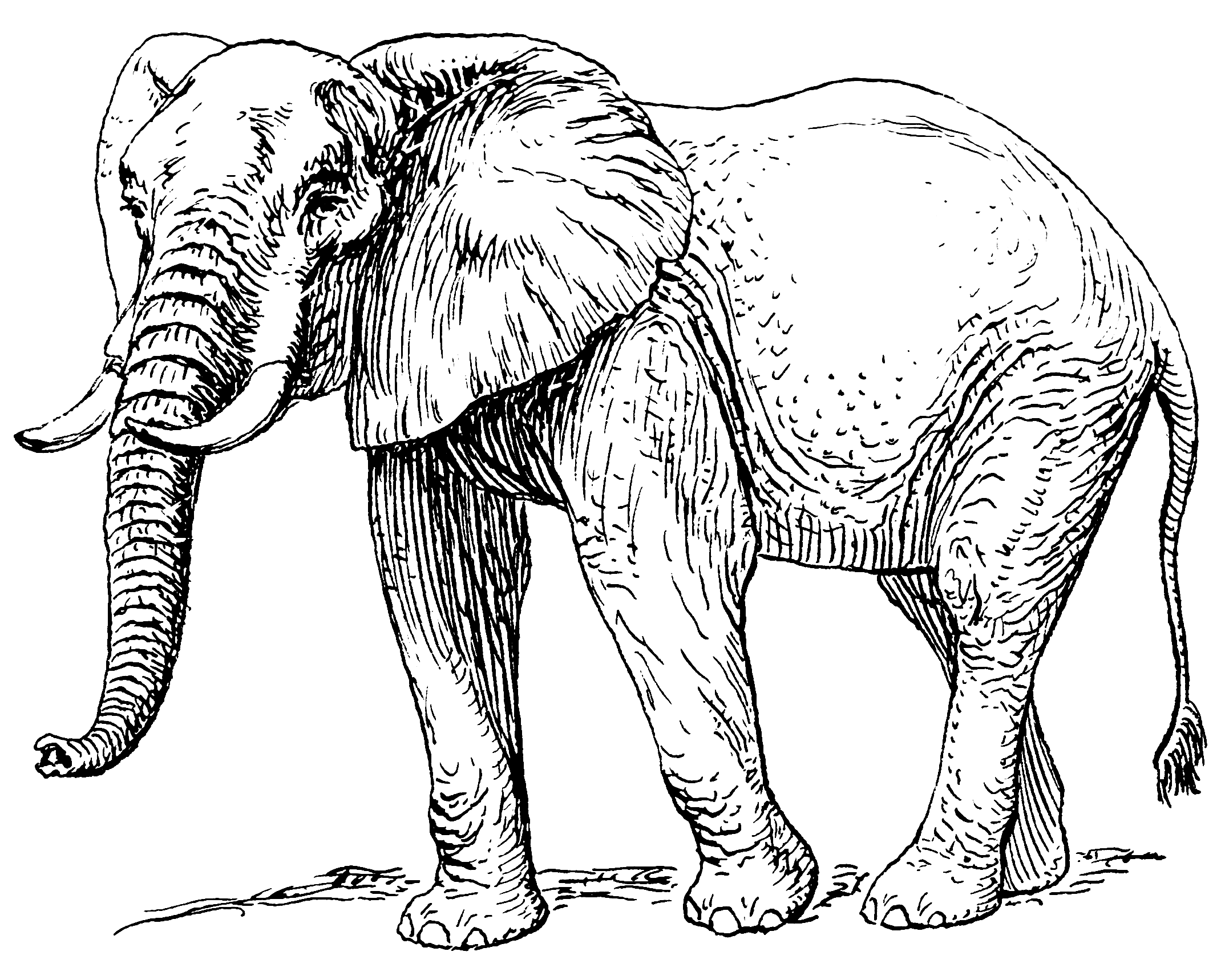 African food diet rivera. Chain clipart elephant