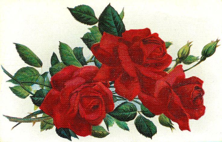 Chain clipart rose.  best art research