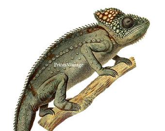 Chameleon clipart. Etsy print animal printable
