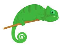 Reptiles clip art pictures. Chameleon clipart