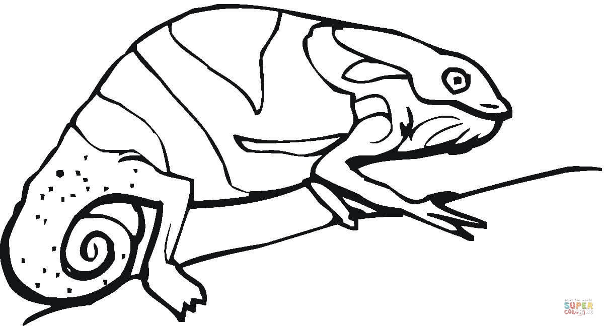 On the tree coloring. Chameleon clipart black and white