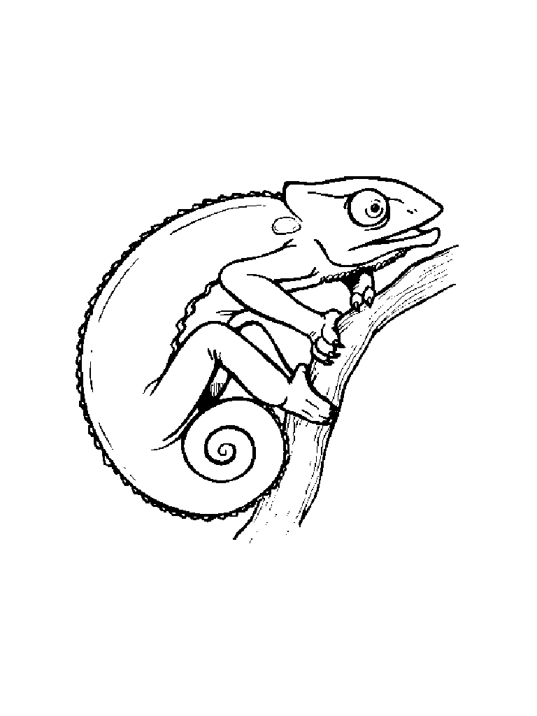 Chameleon clipart chameleon outline. Cliparts x making the