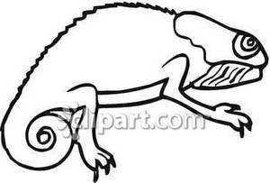 Royalty free picture . Chameleon clipart chameleon outline