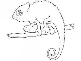 Chameleon clipart chameleon outline. Image result for tat