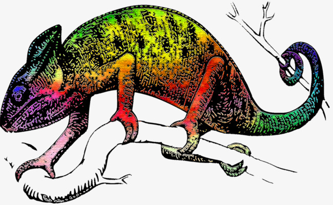 Chameleon clipart colorful. Colored color animal png