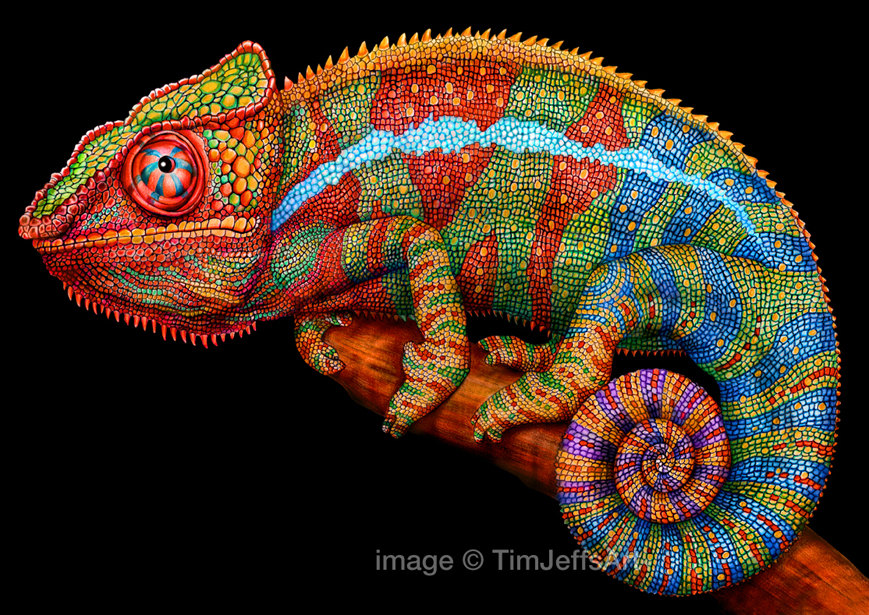 Panther clipground colored pencil. Chameleon clipart colorful