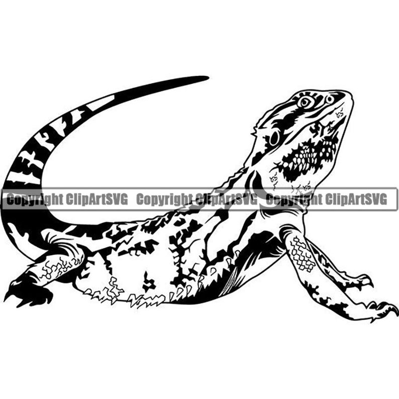 Iguana pet wild reptile. Lizard clipart exotic animal