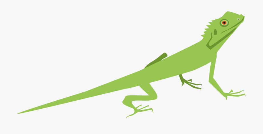 Chameleon clipart gecko. Lizard common iguanas chameleons