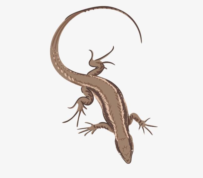 Chameleon clipart gecko. Reptiles chameleons reptile eaves
