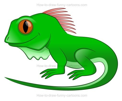 Chameleon clipart iguana. How to draw a