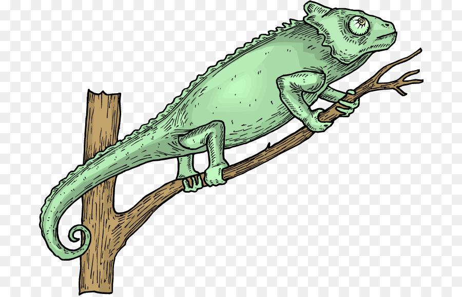 Background lizard illustration . Iguana clipart chameleon
