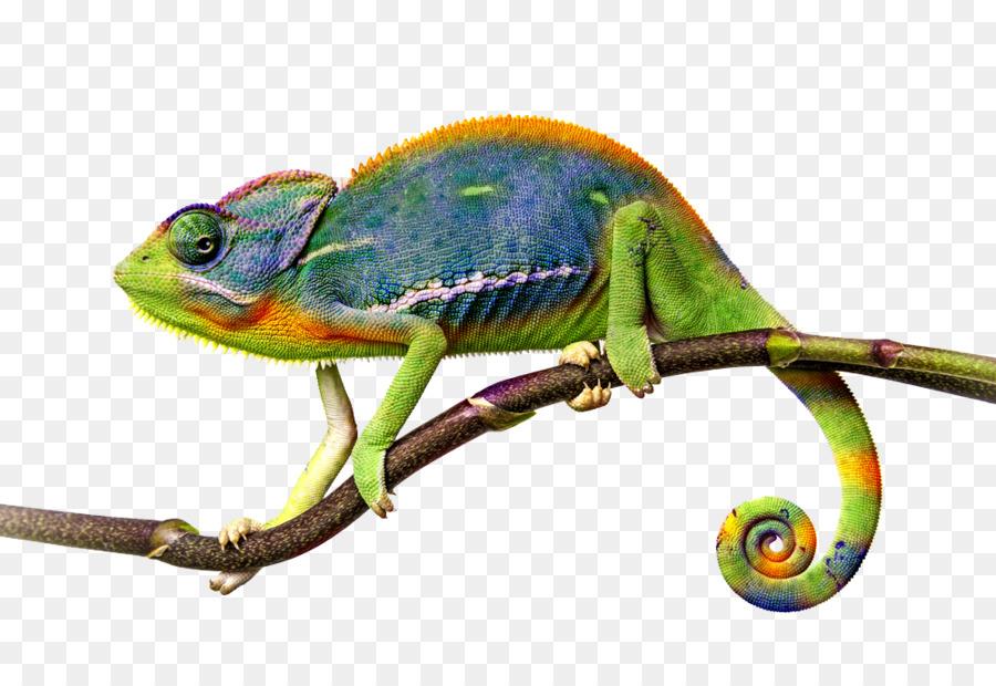 Chameleon clipart illustration. Background lizard