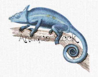 Etsy blue parsons nature. Chameleon clipart illustration