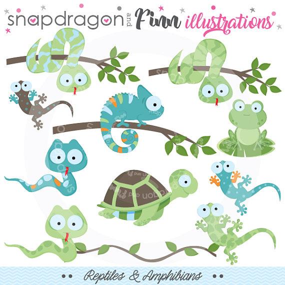 Chameleon reptile amphibian