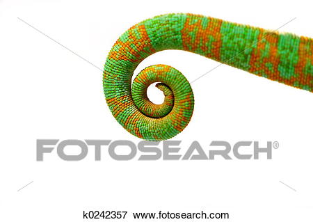 Chameleon clipart tail. Free download clip art