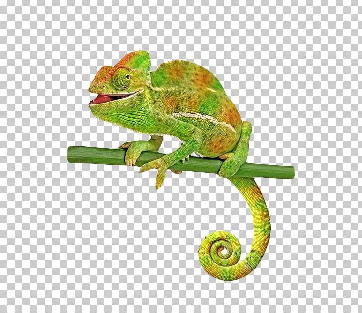 Veiled common lizard stock. Chameleon clipart tail