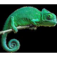 Download free png photo. Chameleon clipart transparent background