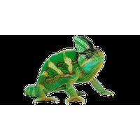 Download hq png image. Chameleon clipart transparent background