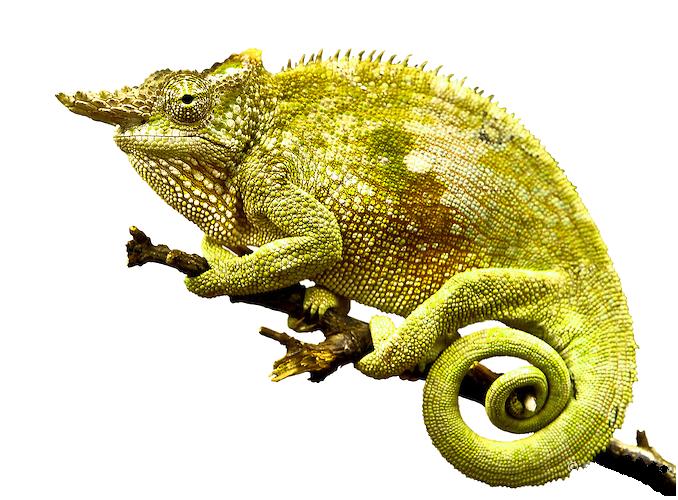 Chameleon clipart transparent background. Png photo mart