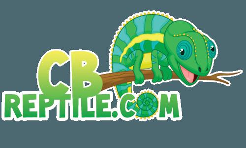 Chameleon clipart veiled chameleon. For sale online chameleons