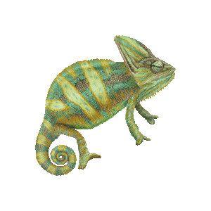 Art graphics free clip. Chameleon clipart veiled chameleon