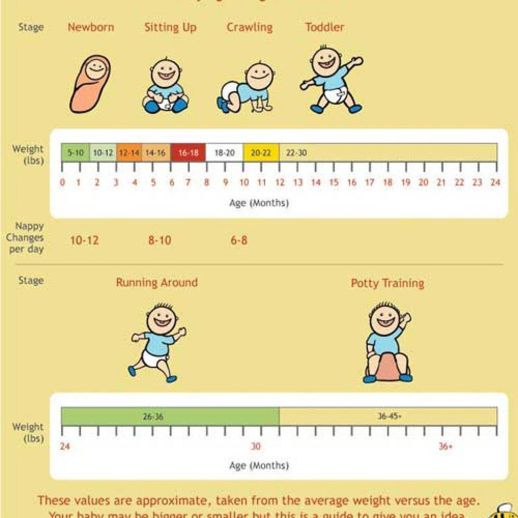 Chart clipart growth rate.  baby weight charts