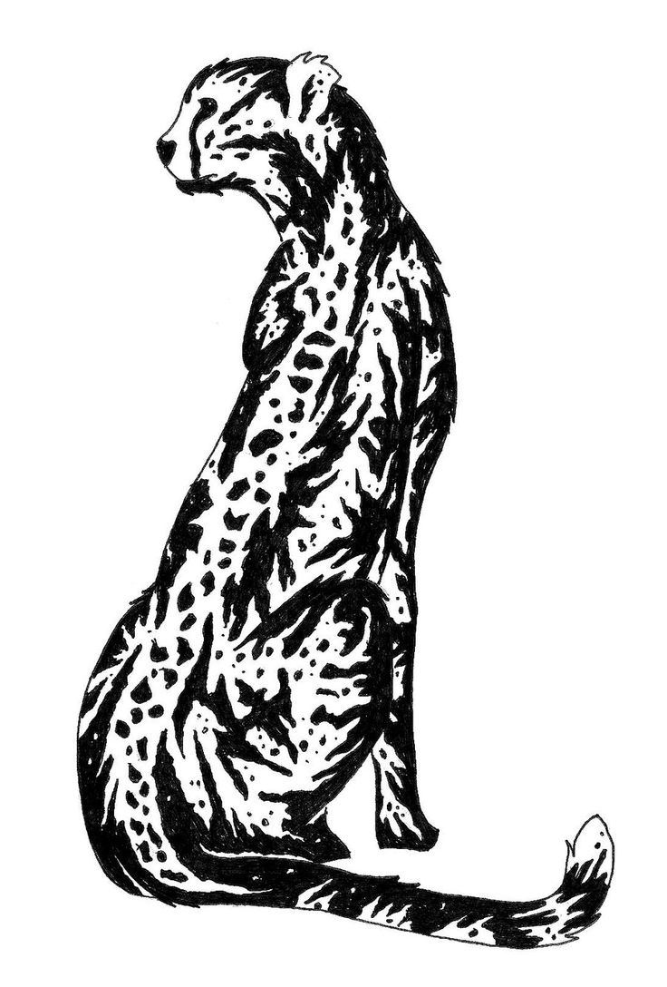 best cheetahs images. Cheetah clipart angry