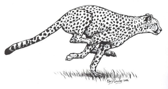 Cheetah clipart body. Animals bosveld tattoo leopard
