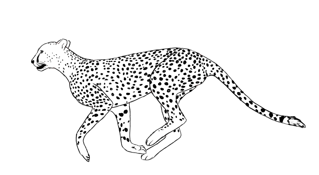 collection of line. Cheetah clipart body