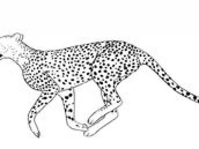 Free drawn download clip. Cheetah clipart body
