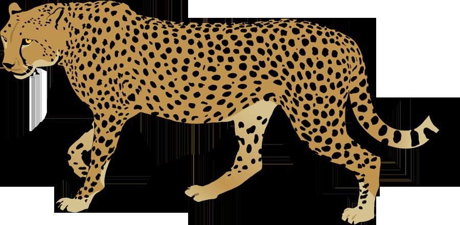 Pawprint clipart jaguar.  collection of cheetah