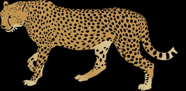 Clip art candelalive co. Cheetah clipart cheetah cub