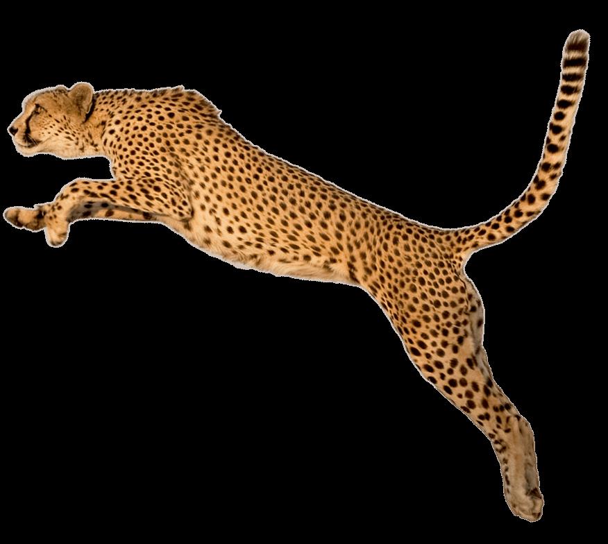 Jaguar clipart cheetah. Jump transparent png stickpng