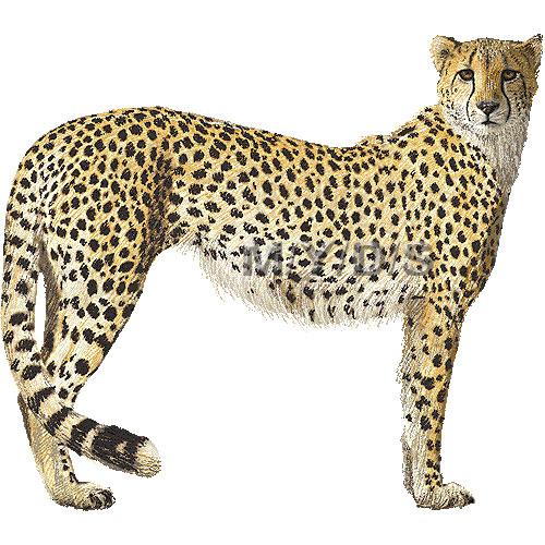 Free images clipartix . Cheetah clipart kid