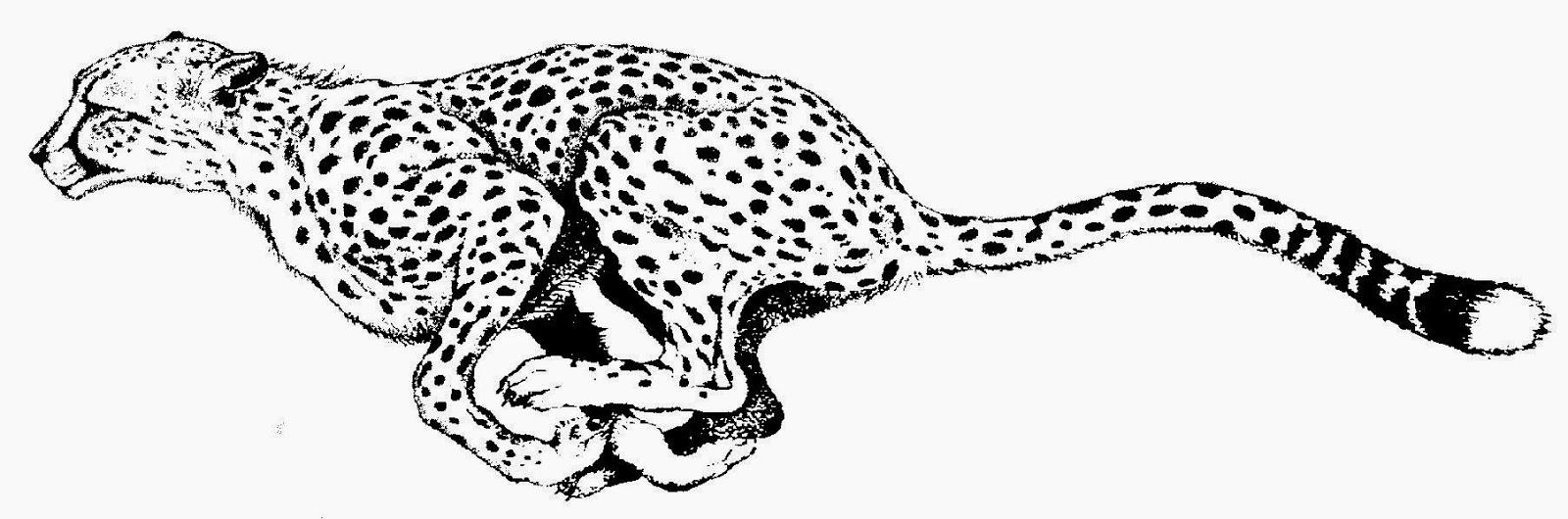 Cheetah clipart kid. Print black and white