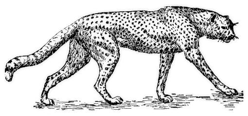 Outline clipartix . Cheetah clipart kid