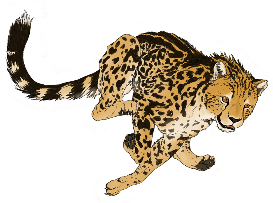 Image png transparent picture. Wildcat clipart cheetah