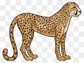 Cheetah clipart transparent background. Realistic png download