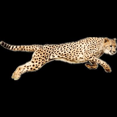 Cheetah clipart transparent background. Sleeping png stickpng running