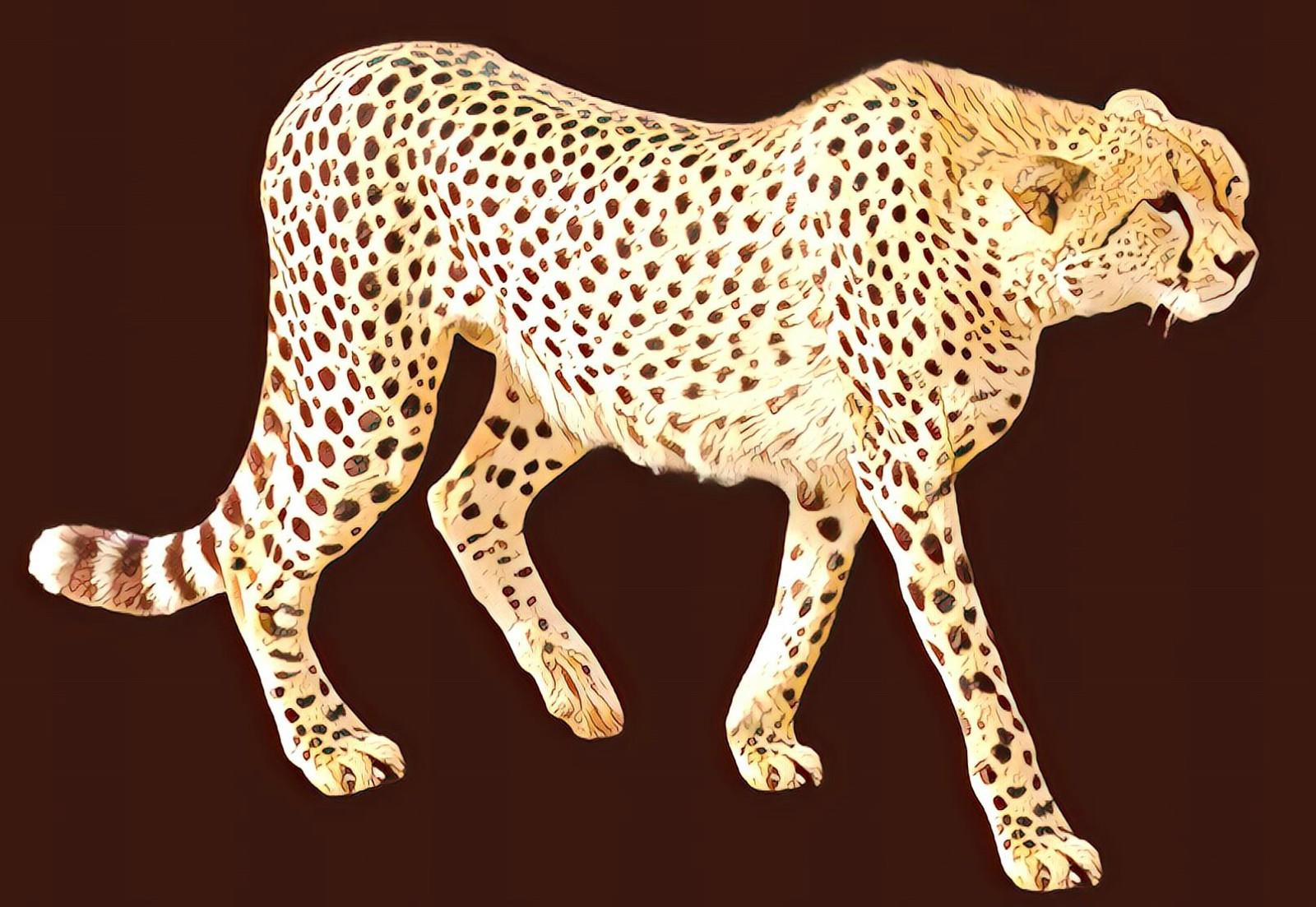 Leopard cat jaguar terrestrial. Cheetah clipart transparent background