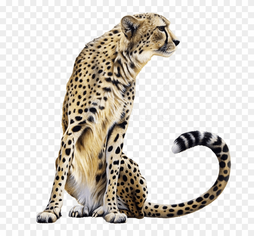 Free png sitting images. Cheetah clipart transparent background