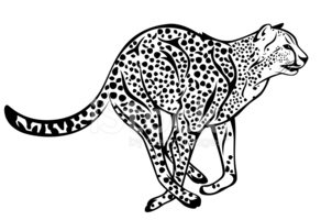 Cheetah clipart vector. Stock vectors me