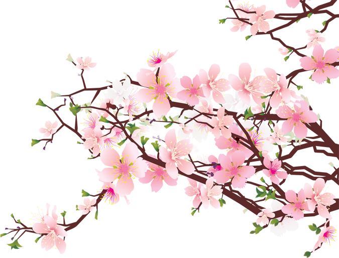 Branches of blossoms clipart. Cherry blossom flower png