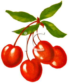 Cherry clipart bunch cherry. Vintage illustration of a
